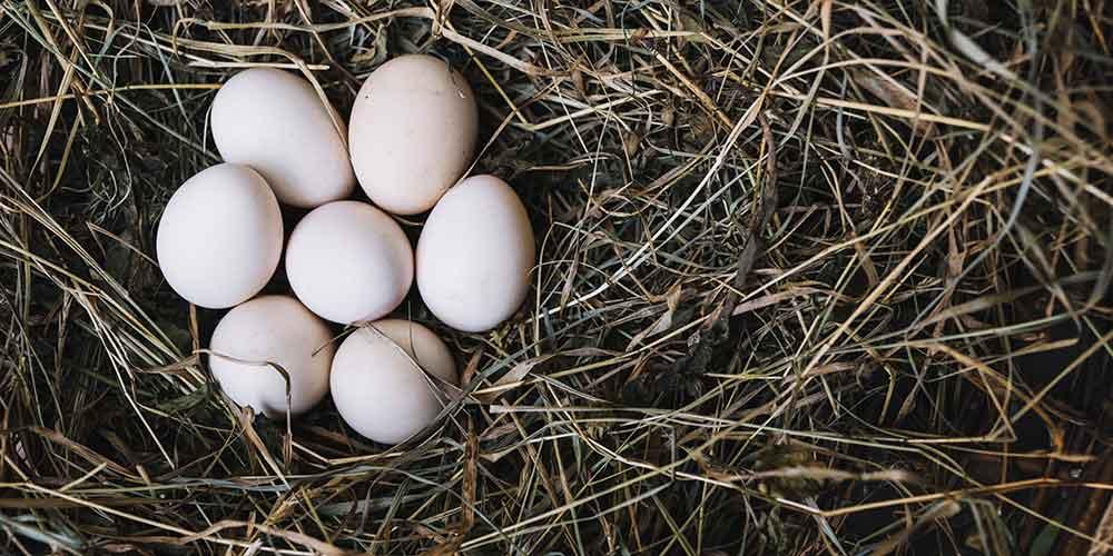 que-es-la-cascarilla-o-efun-cascara-de-huevo